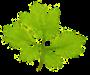 Oak House Treatment Programs