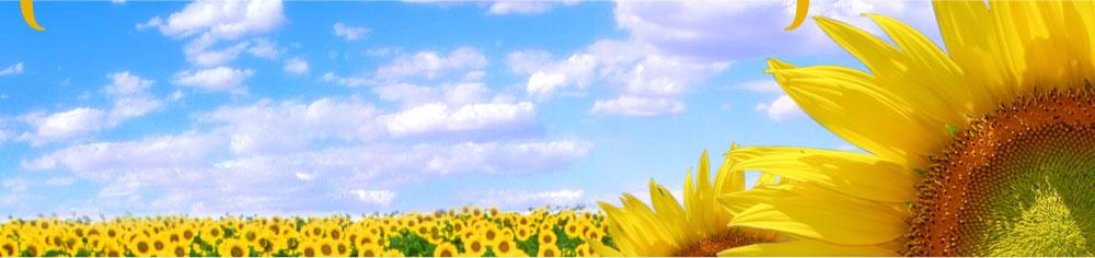 Region One Mental Health Center - Sunflower Landing